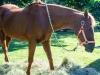 DSC_6563Raid-Horse-Lefty-1
